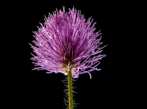 small-flower-202724_640